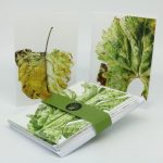 Leafscape greetings card pack