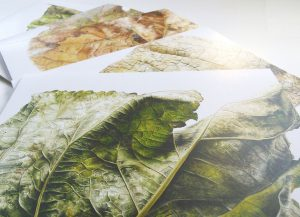 Leafscape greetings cards